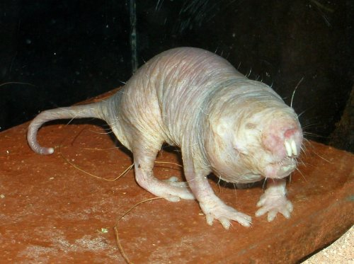 pictures of really ugly animals. the ugliest animal alive,